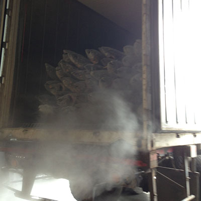 Frozen fishes delivery to our factory